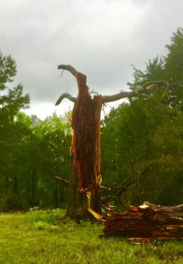 prayer walk and beauty in destruction